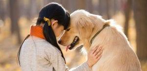Soñar con perros mal alimentados