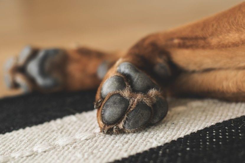 Protege las almohadillas de tu perro