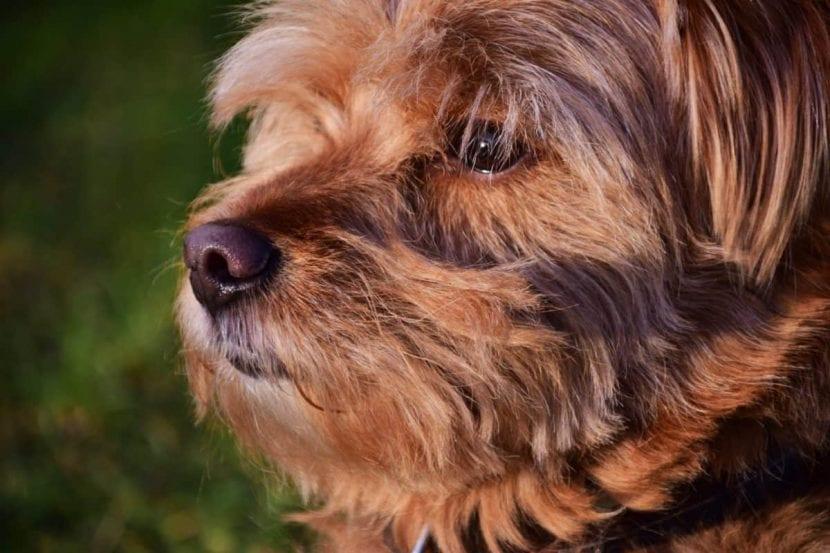 Cuida de tu cachorro para que no tenga problemas de halitosis
