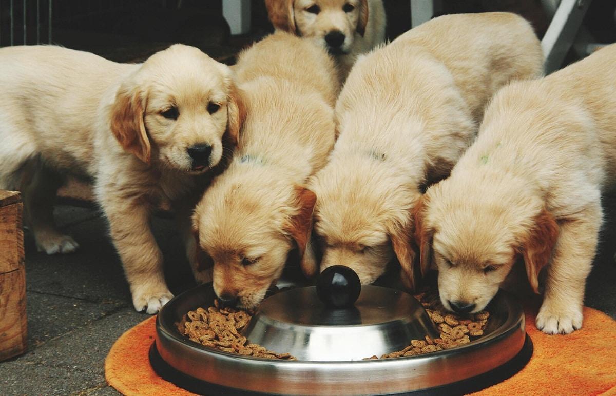 Los cachorros deben beber leche materna durante los dos meses