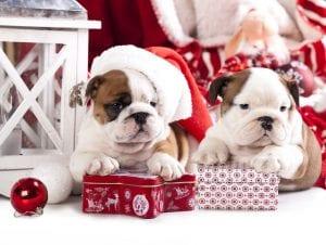 No regales perros en navidad