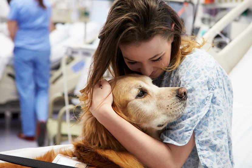 La terapia con perros es una gran alternativa