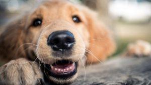 Los bigotes de los perros son muy importantes para ellos