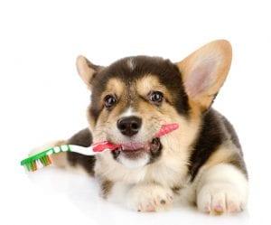 La limpieza dental de tu perro es mas importante de lo que piensas