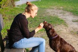Perro labrador con su dueña