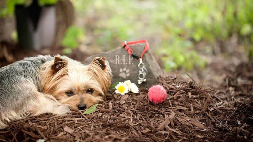 afrontar la muerte de un perro