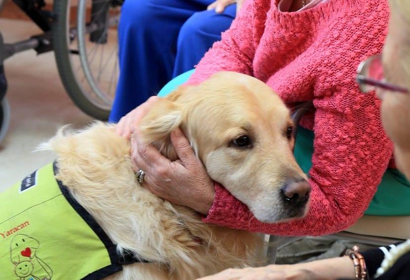 Los perros como terapia para la soledad