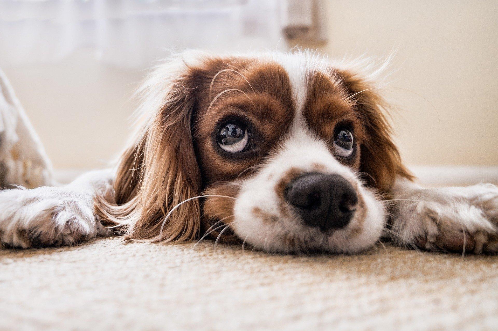 Los cambios en la dieta pueden provocar cólicos a los perros