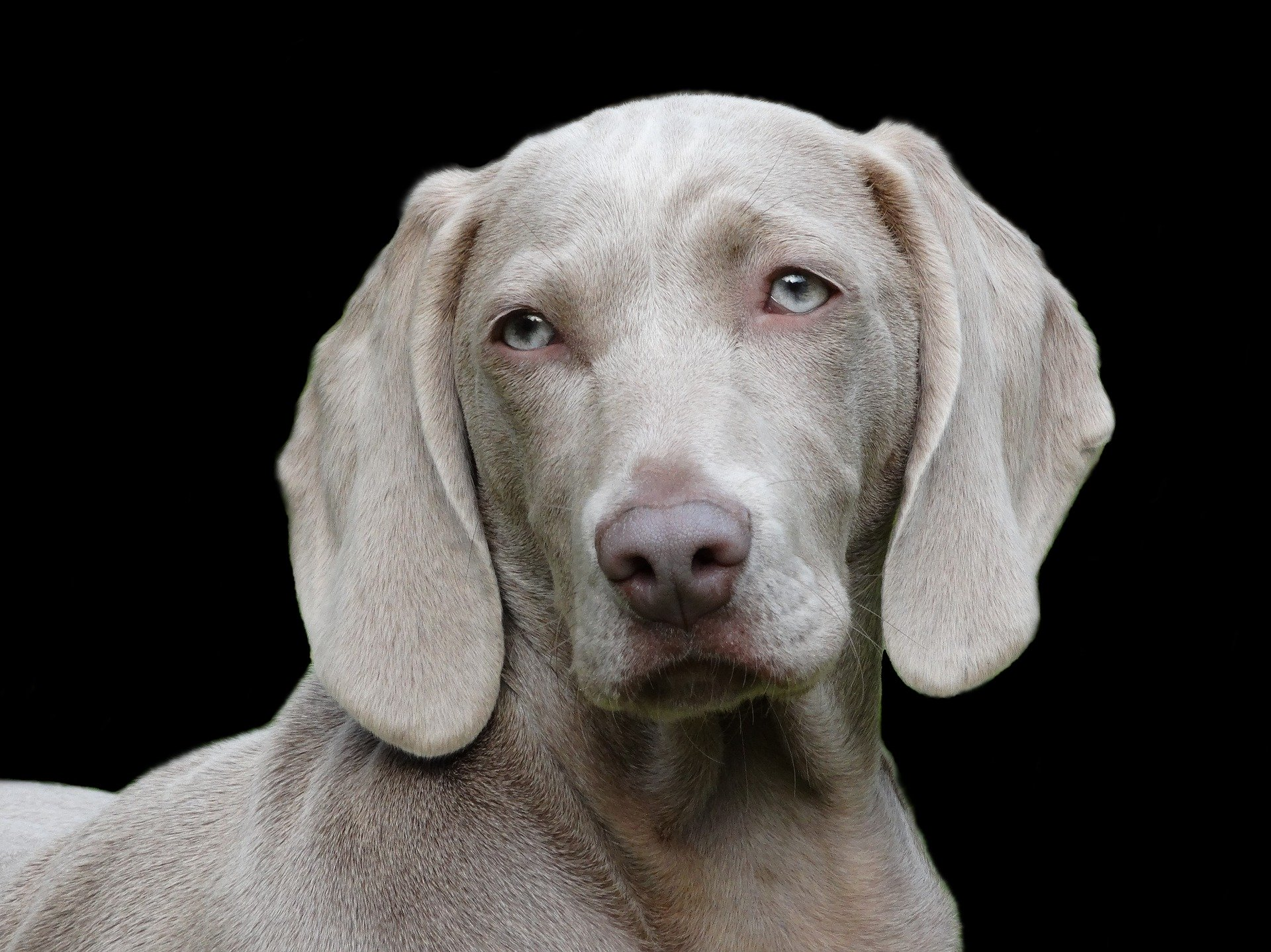 Un veterinario te dirá cómo tratar a tu perro