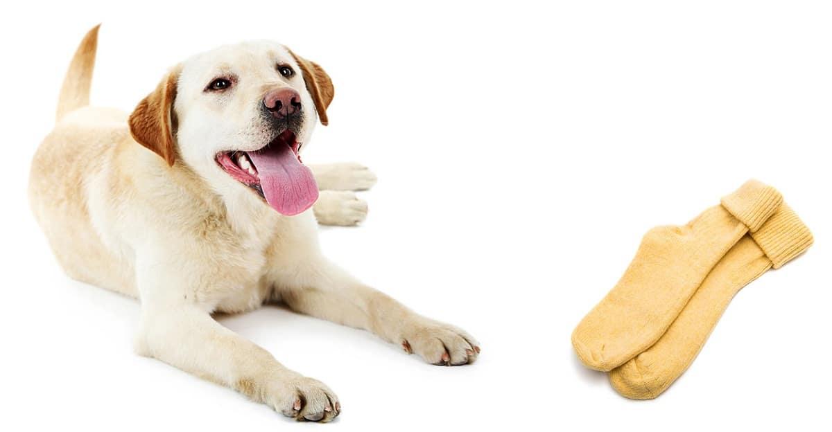 No dejes que tu perro juegue con calcetines