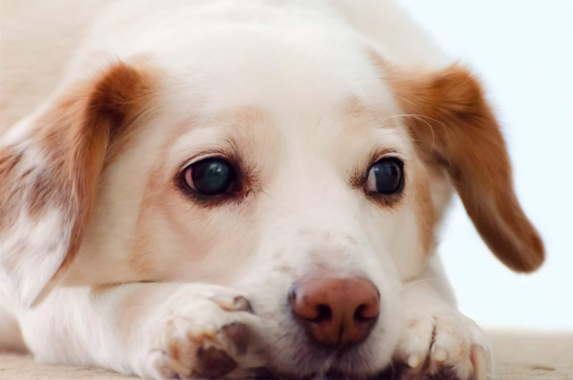 Dale cariño a tu perro si está triste
