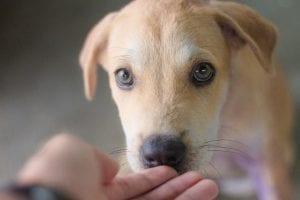 Calma a tu perro con paciencia
