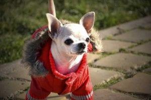 Se acerca el invierno, prepara a tu perro