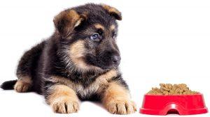 Dale croquetas a tu cachorro a partir de los dos meses