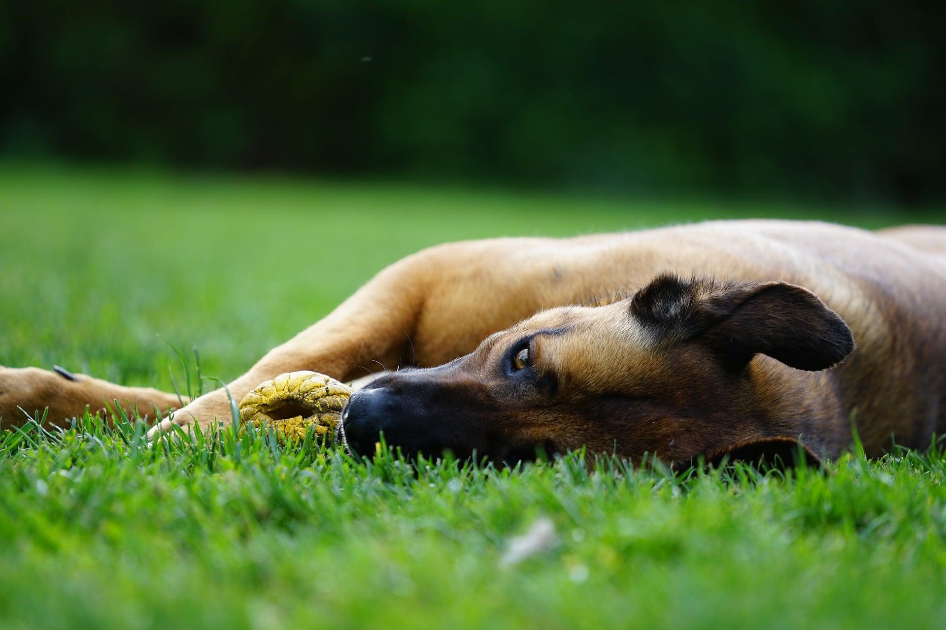 Las patas de un perro se han de cuidar bien