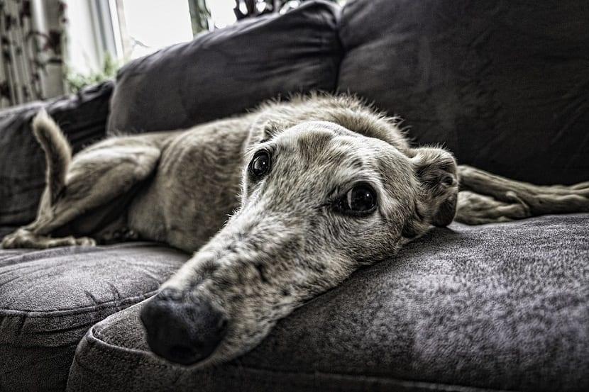 Humanizar al perro es algo que no debemos de hacer