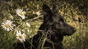 Relajantes de origen natural para perros
