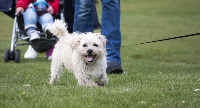 Observa el comportamiento del perro desconocido para saber si puedes acercarte