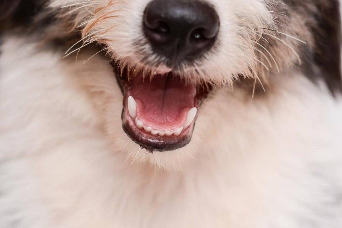 Los bigotes son esenciales para que el perro pueda orientarse