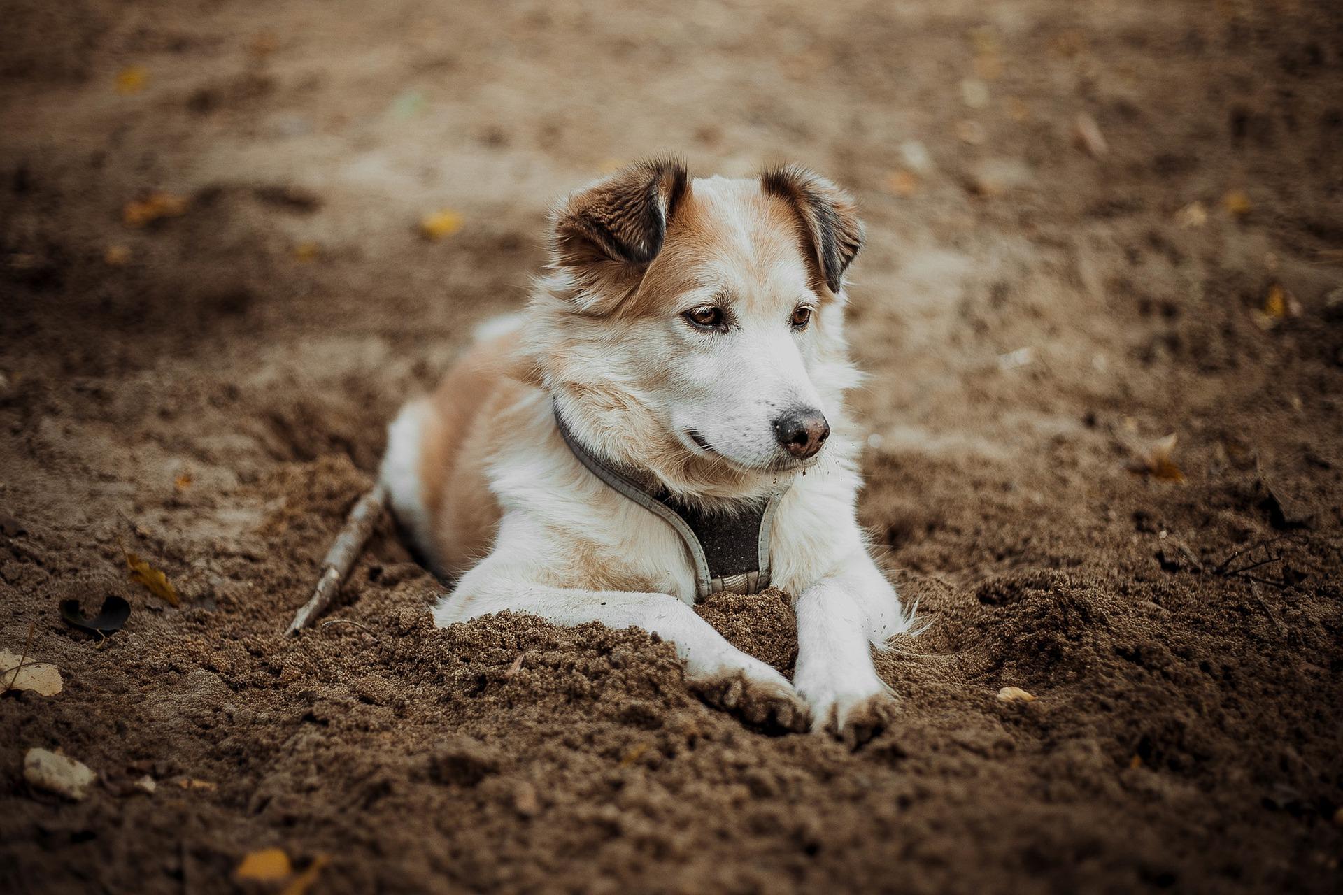 Si tu perro tiene las patas inflamadas, llévalo al veterinario