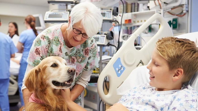 Doghospital realmente funciona