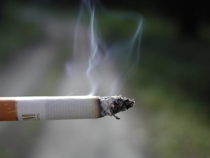 El tabaco afecta seriamente a los perros