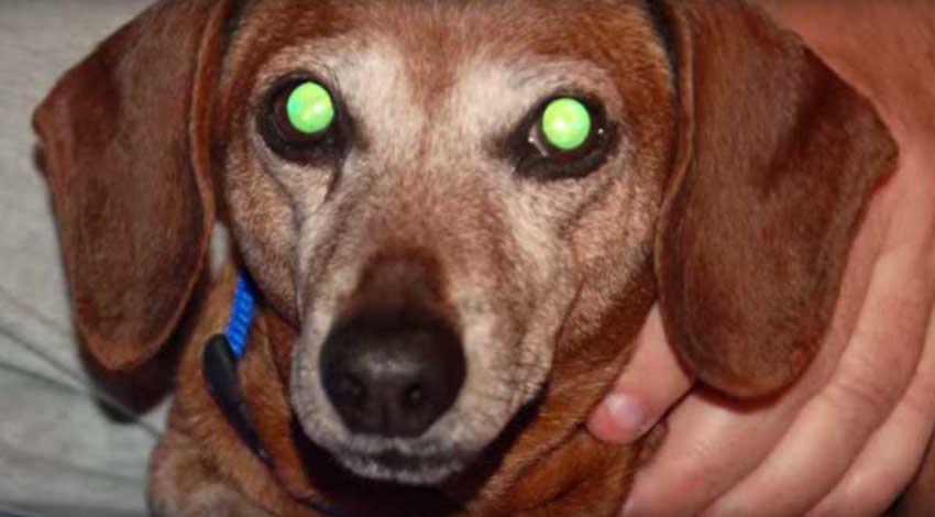 Vision perros oscuridad