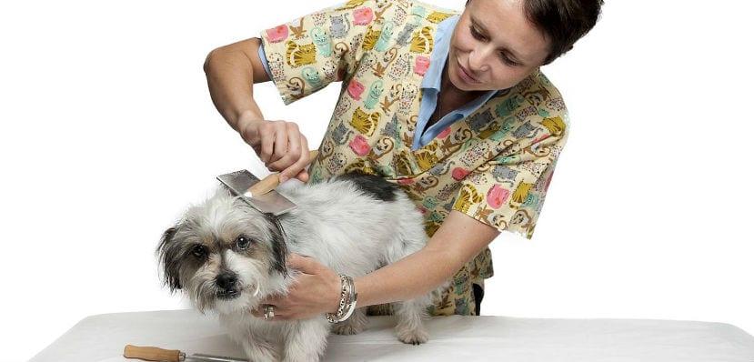 Mujer peinando a un perro.