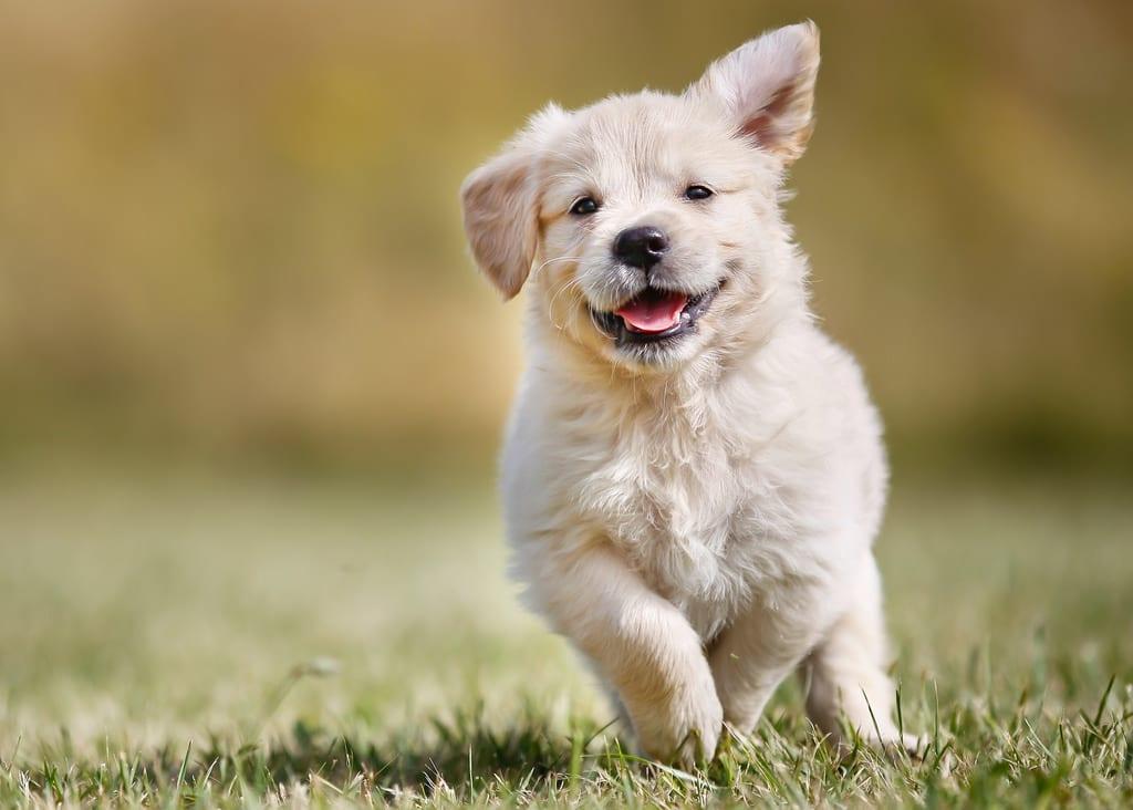 ¿Qué saber sobre los cachorros?