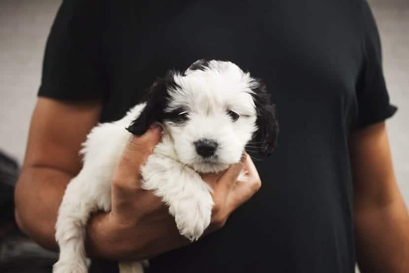 cuidado y precaución con los cachorros