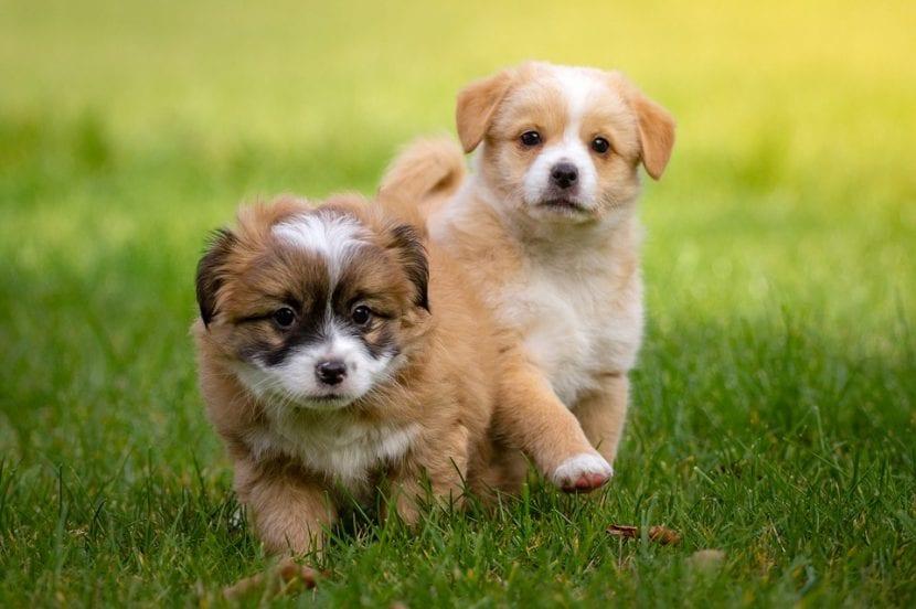 Los cachorros son animales increíblemente adorables