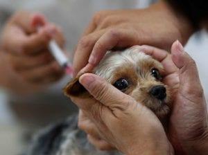 El perro es el mejor amigo del hombre y por consiguiente también necesita sus cuidados