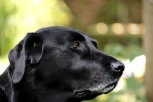 El cáncer de huesos debe ser detectado por un veterinario
