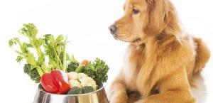 Nutrición para el perro