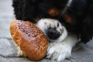 Consejos para que tu perro no coma tan rapido