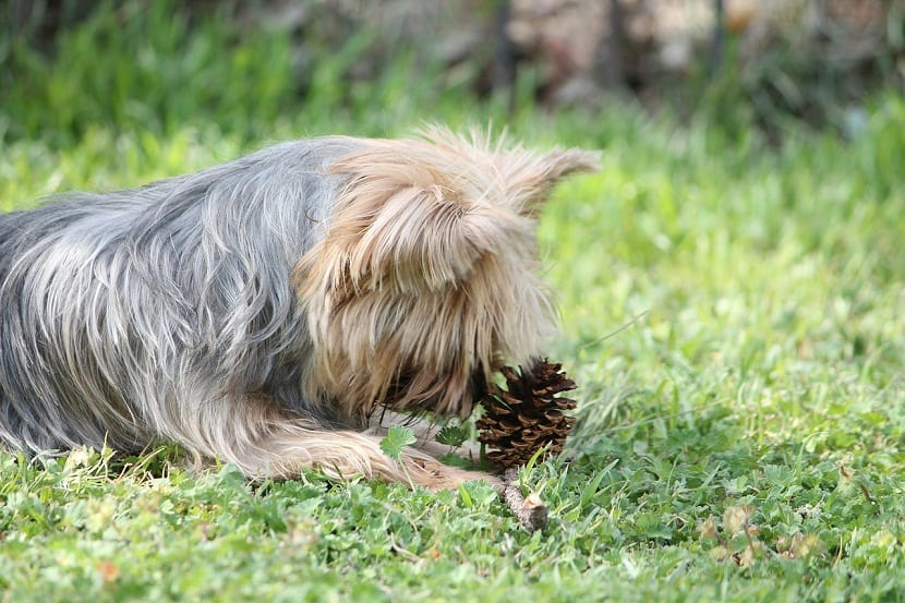 plantas venenosas para perros