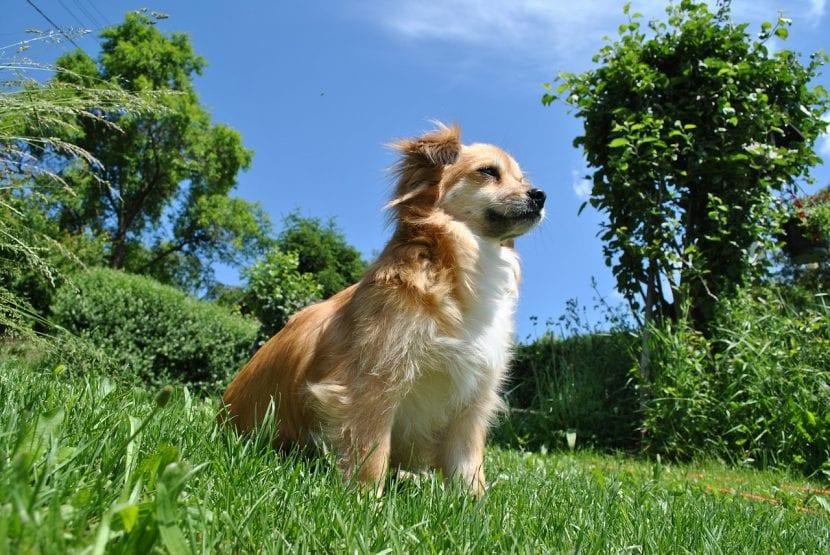 Los perros pequeños suelen vivir más que los grandes