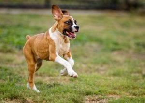 Perro jugando feliz