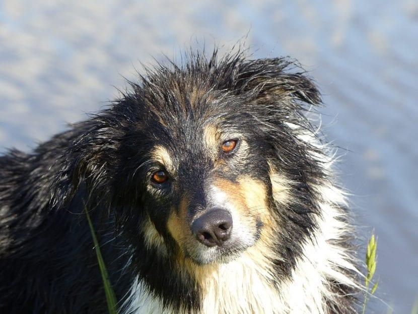 Hay perros a los que les encanta el agua