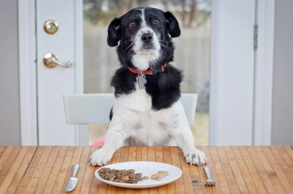 Los perros que tienen hambre sus tripas le suenan