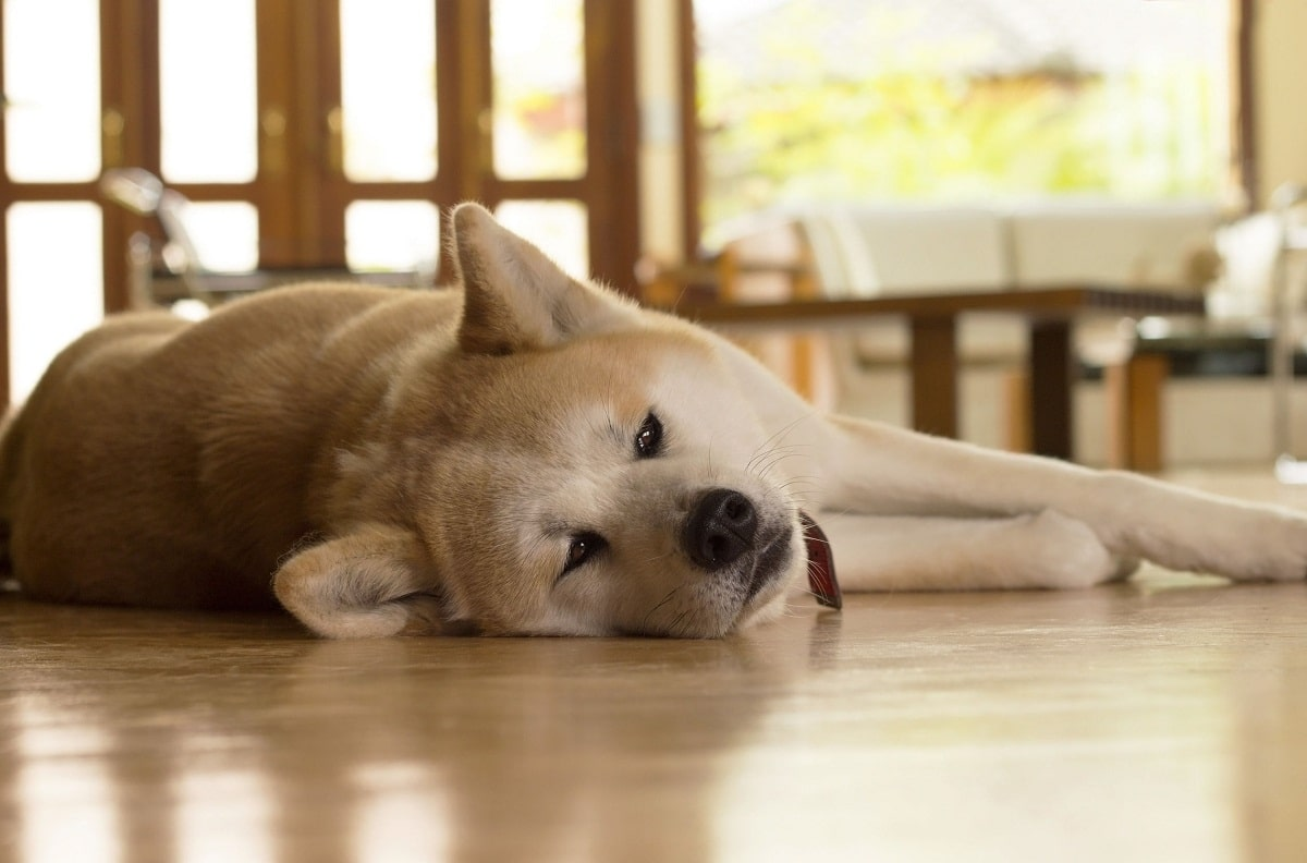 A los perros que les duele la tripa les gusta tumbarse