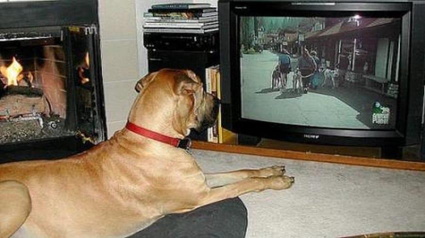 perro-viendo-la-television