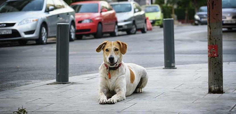 Perros urbanitas