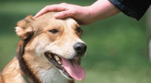 Cómo acariciar adecuadamente a un perro