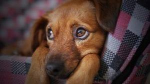 Cachorro con miedo