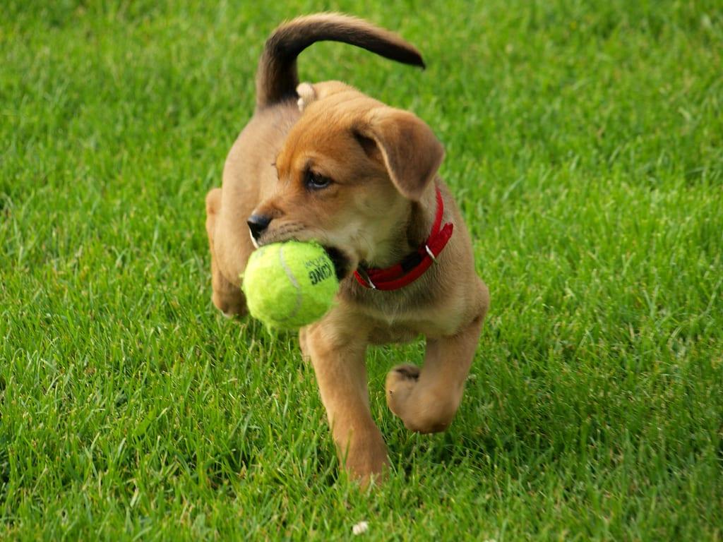 Cachorro con una pelota
