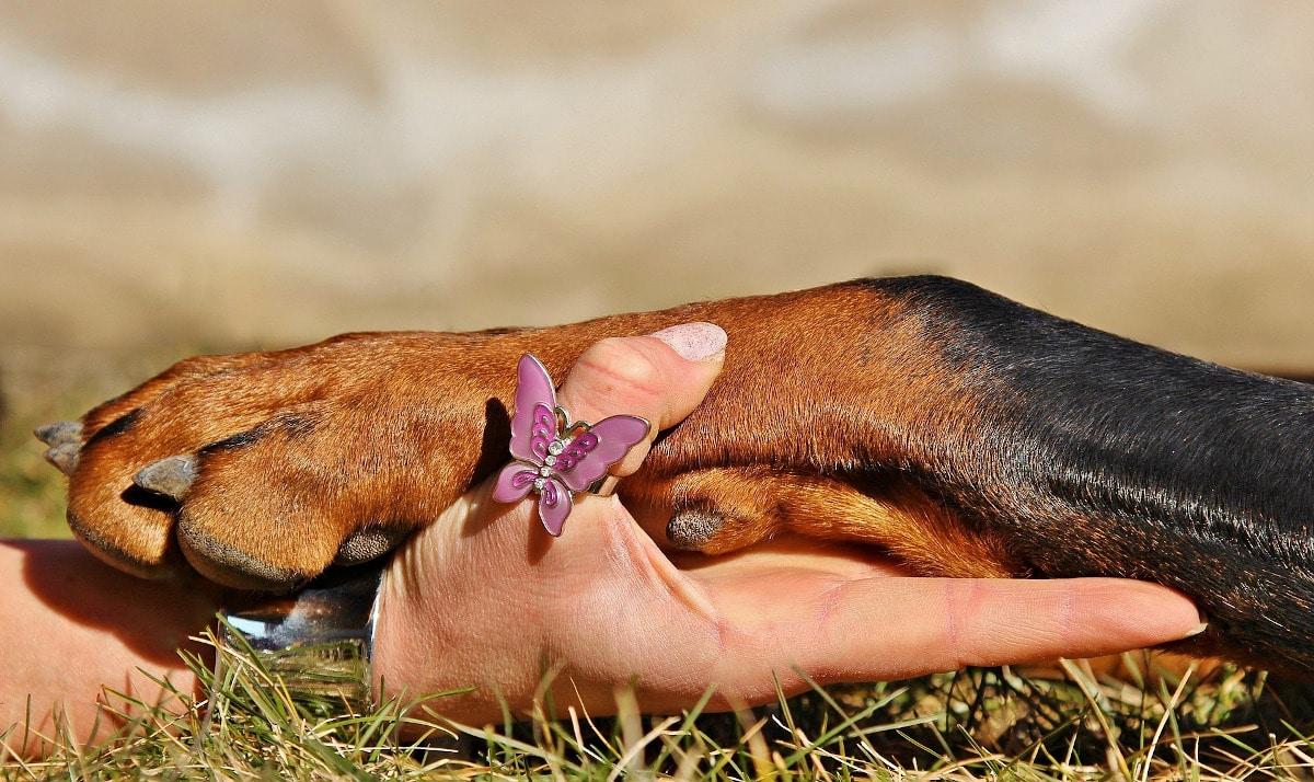 Hay varias causas por las que tu perro puede tener las patas rojas