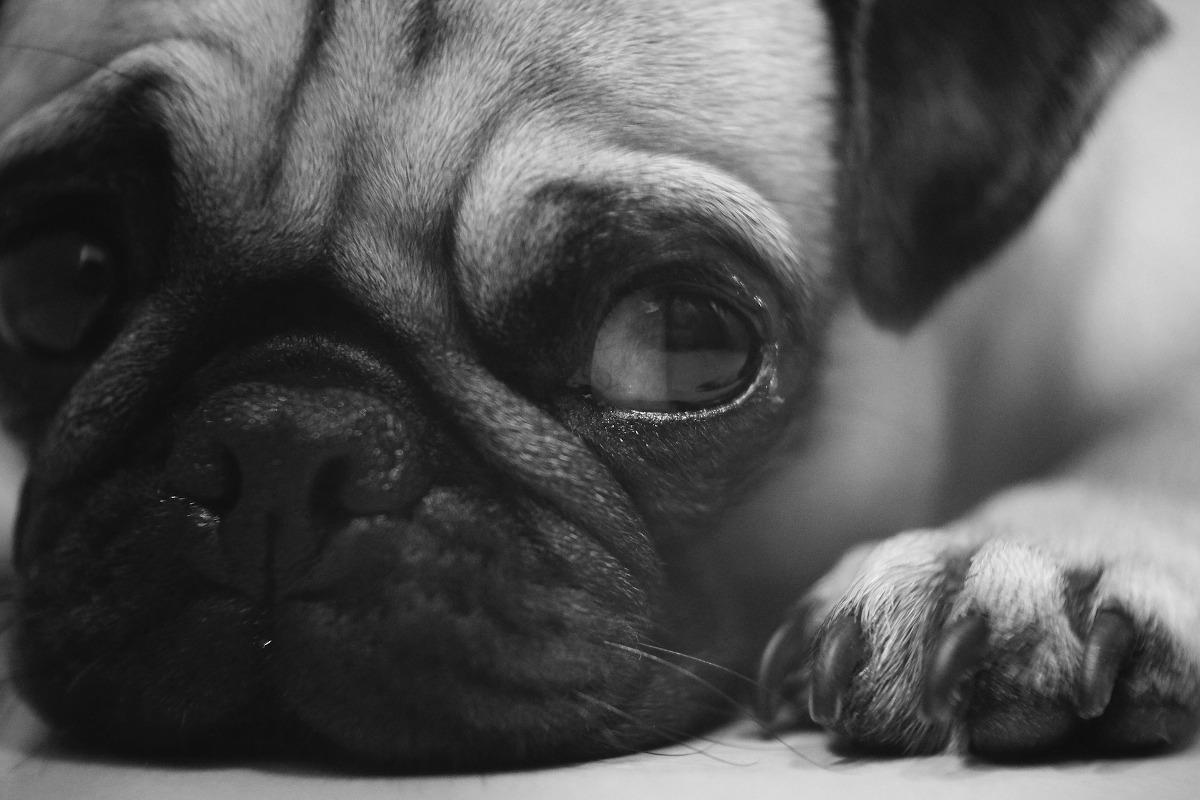 Los perros pueden tener las patas rojas