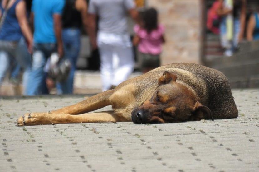 Socializar perros maltratados para su adopcion