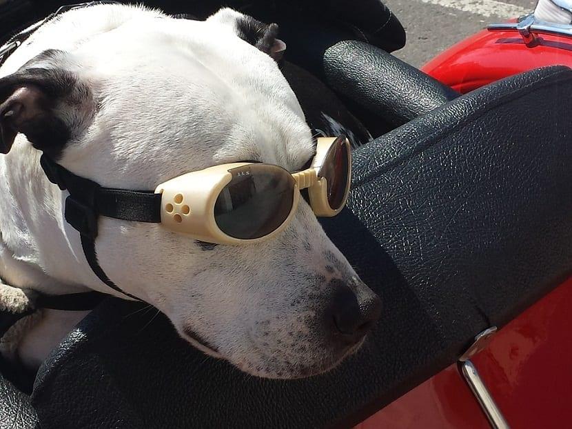 como viajar en tren con tu perro